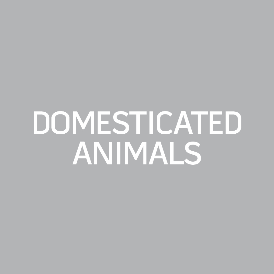 Domesticated Animals